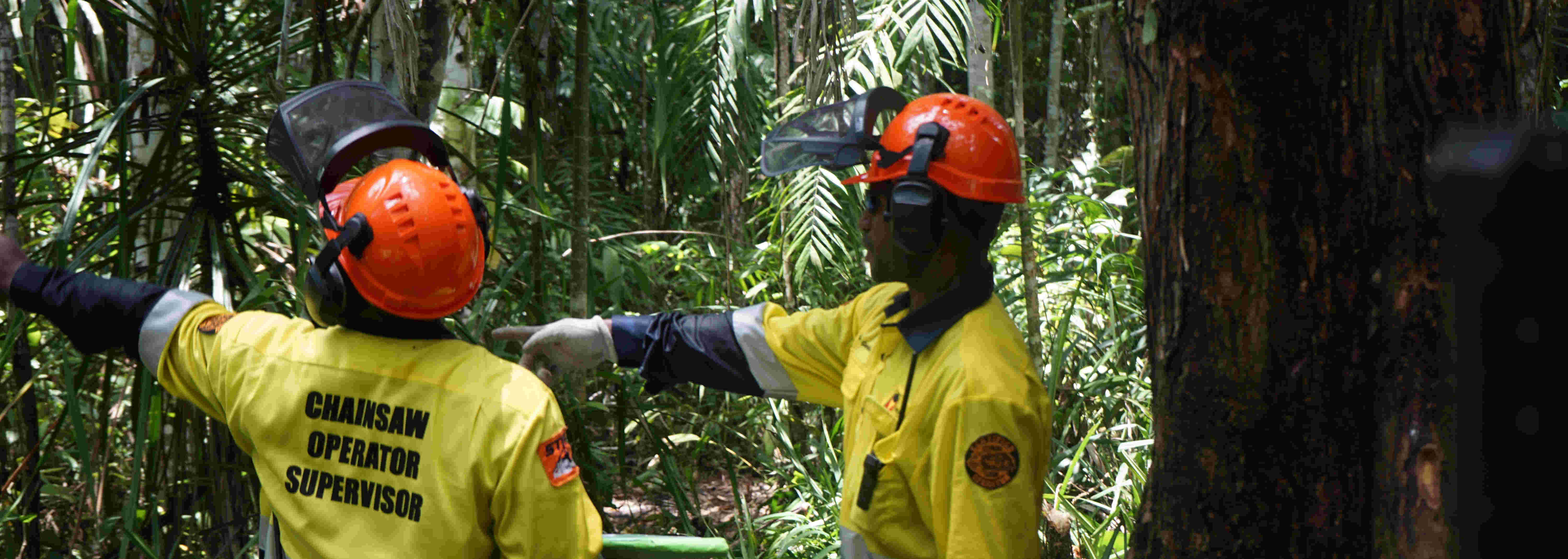 Chainsaw Operations at Gulf of PNG